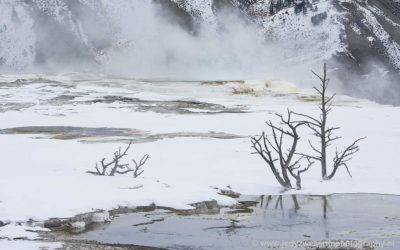Main Terace, Jupiter Terace, Canary Spring, Mammoth Hot Spring, Yellowstone, USA, 16-1-2019
