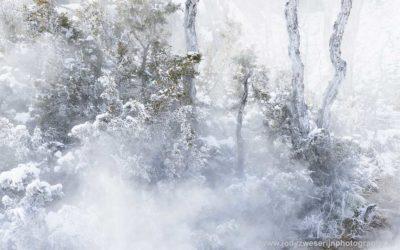 Main Terace, Jupiter Terace, Canary Spring, Mammoth Hot Spring, Yellowstone, USA, 22-1-2019