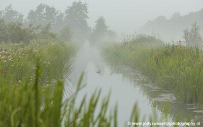 Polder de Kikker, Zouweboezem, 23-8-2020