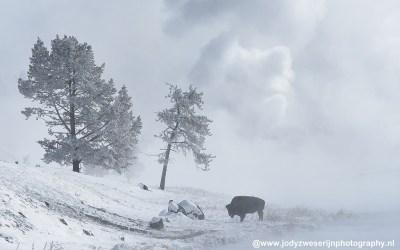 Yellowstone 2019
