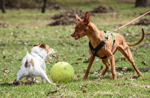 Democracia de perros
