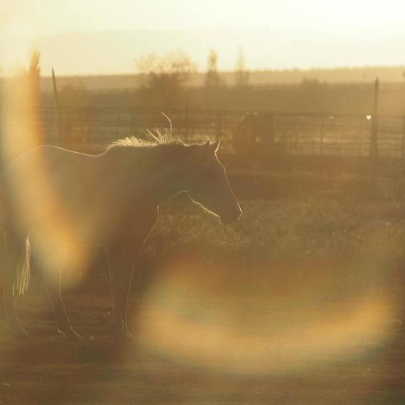 Golden Hour Horse