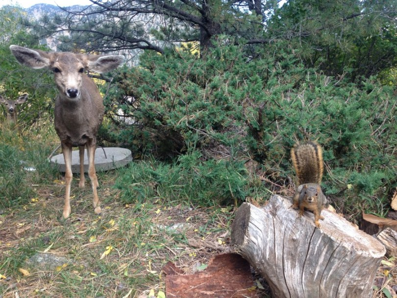 deer and squirrel