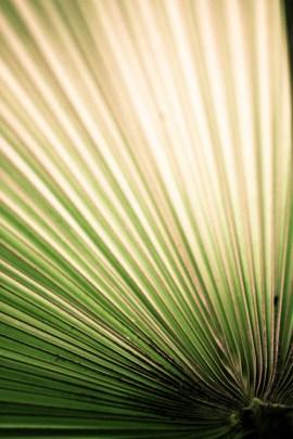 Leaf/Fan