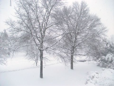 Snowy trees during the Blizzard of 2010