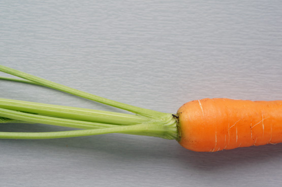 One carrot – JOELIX