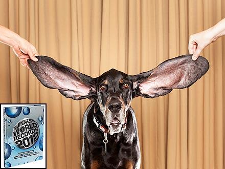 harbor-dog-the-longest-ears-440