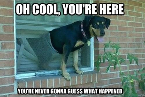funny-dog-window-broken
