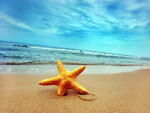 beach-beautiful-starfish-on-the-beach_1600x1200_93284