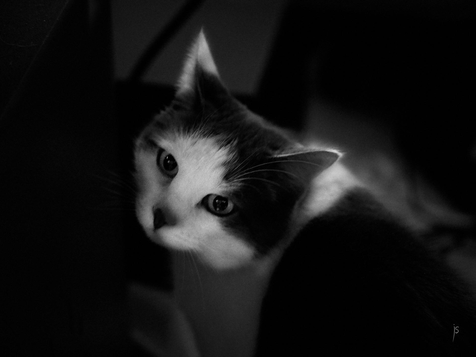 013 - le chat deux