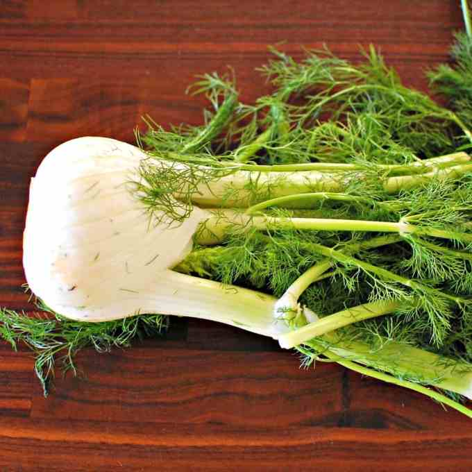 fennel bulb with stem and fronds