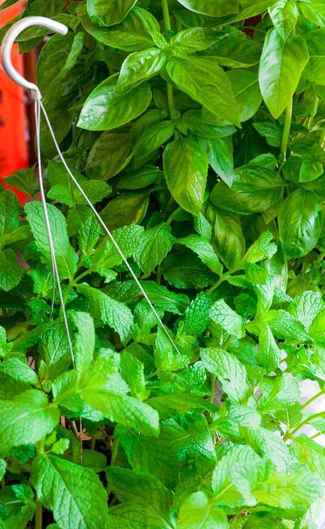 Basil and mint vinaigrette. | joeshealthymeals.com