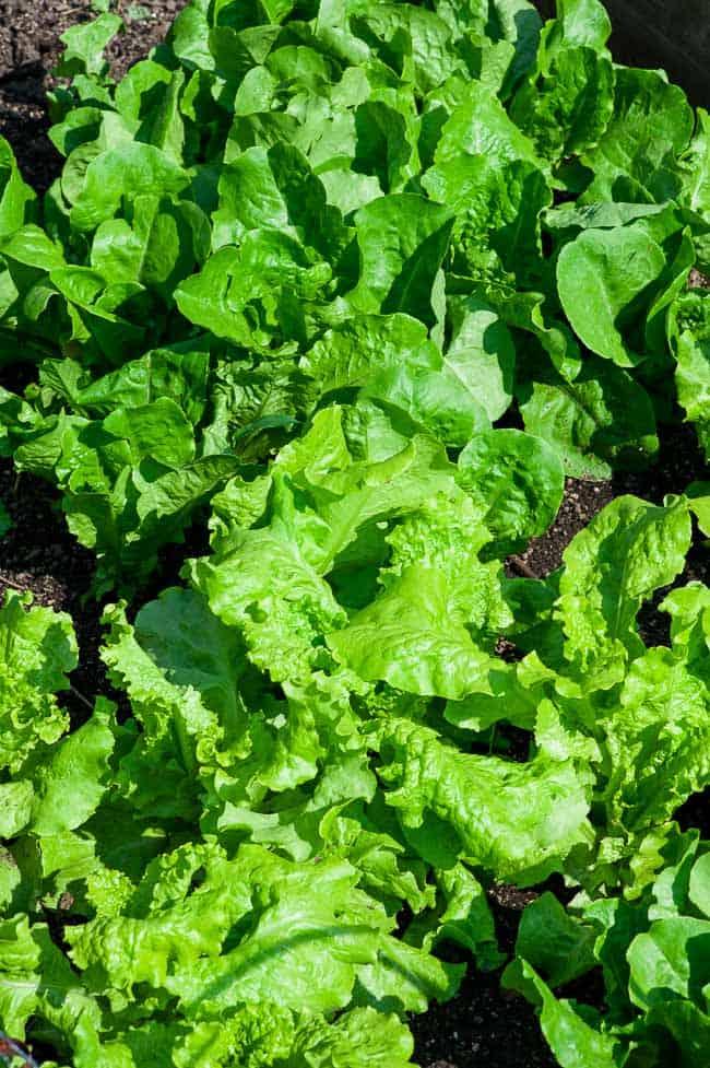 Fresh leafy greens. | joeshealthymeals.com