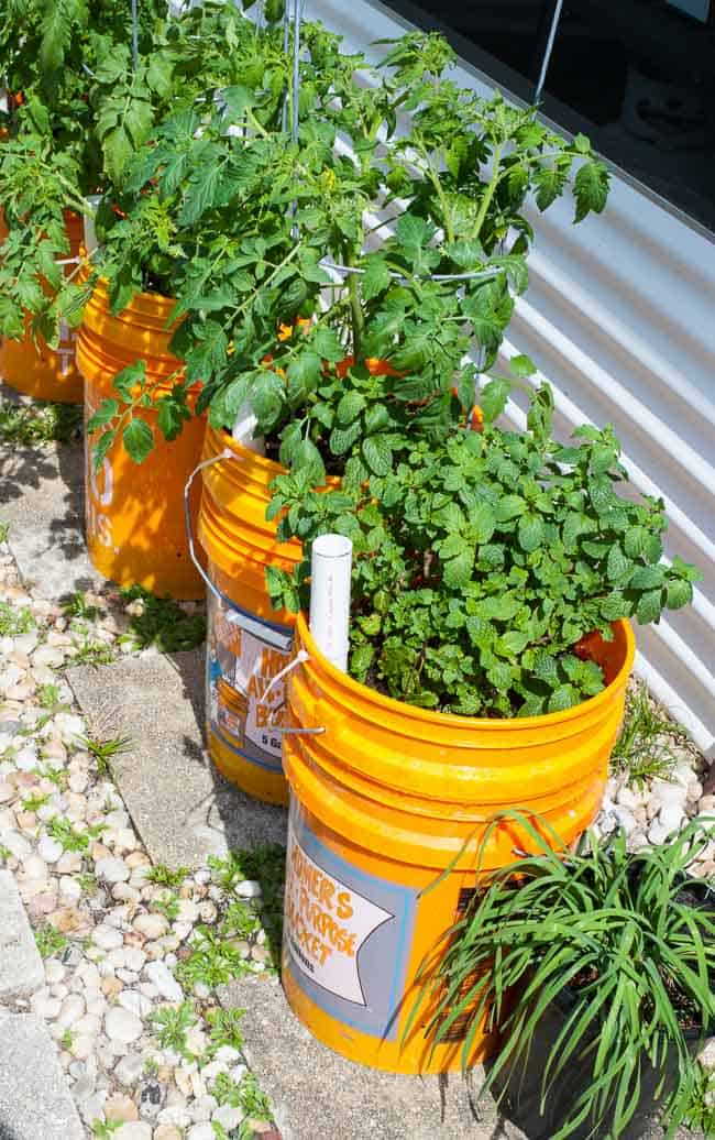 Container garden in the bright sun.