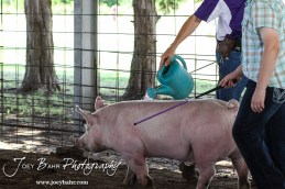 during the 2015 Rush County Fair Animal Shows