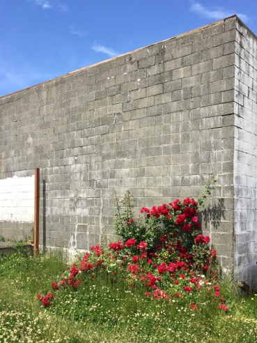 exterior cinderblock corner wall with red flowers
