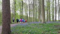 Bois de Hal 207 (joggeurs) 01-05-2017 09-57-11