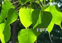 पेड़-पौधा : हमार जिनगी
