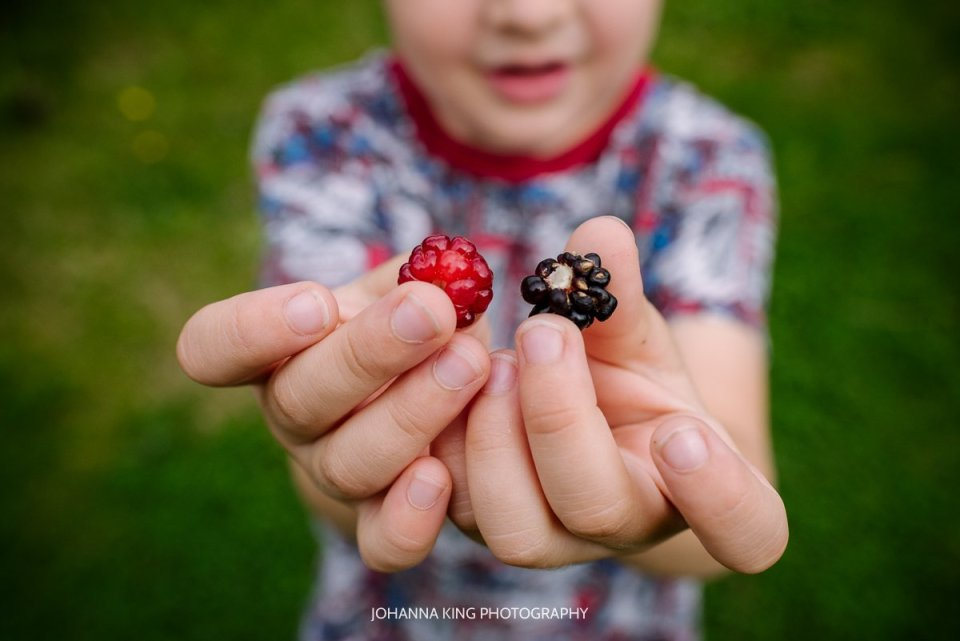 Close up of boy's hands showing a raspberry and a blackberry