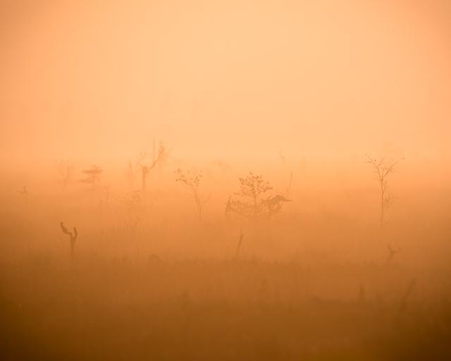 Morgon på myren
