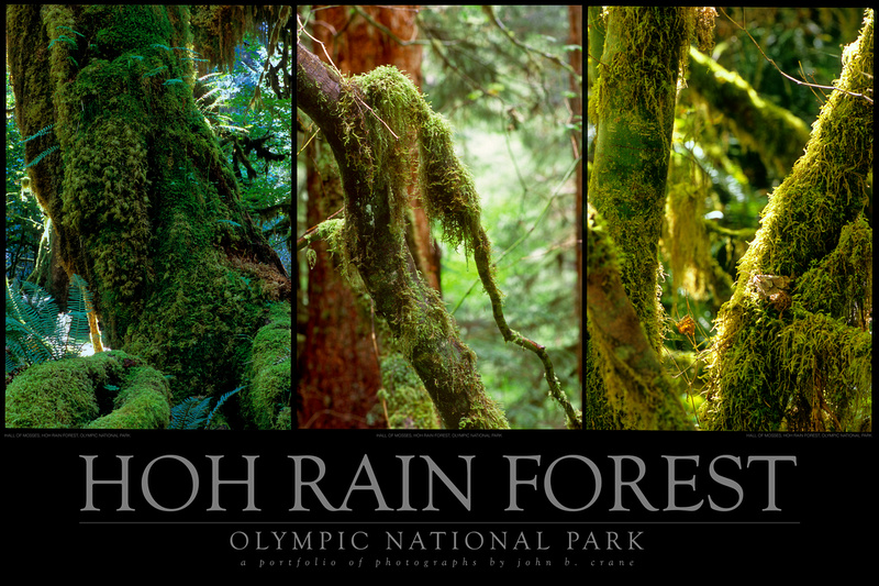 HOH Rainforest Tryptich no.1