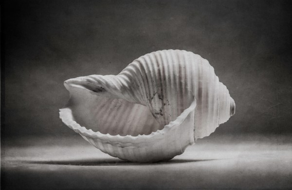 Black and White Shell Photography