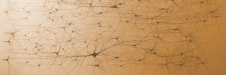 neurons and craniosacral therapy