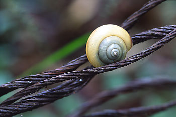 Snail On Wire