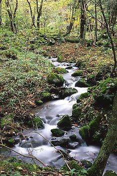 Stream By Falls