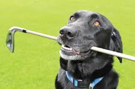 Teaching an Old Dog New Tricks, John Hughes Golf, Orlando Golf Lessons, Best Orlando Golf Schools, Best Orlando Junior Golf Lessons, Best Orlando Junior Golf Schools, Best Orlando Ladies Golf Lessons