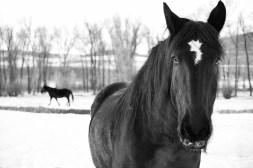 lower elk horses