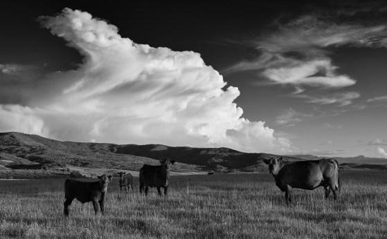 cloud pasture rev 1