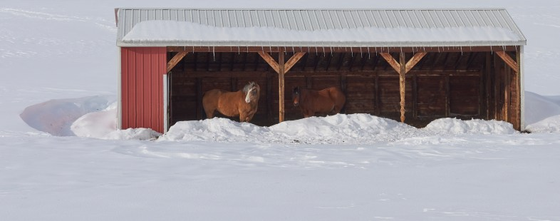 20 mile horses winter shed no 3
