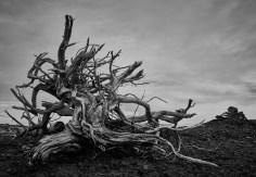 driftwood at cabbage island no 3