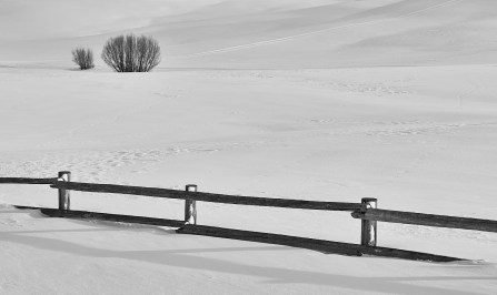 20 mile fence and trees in winter