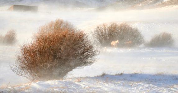 wind horse alt 2