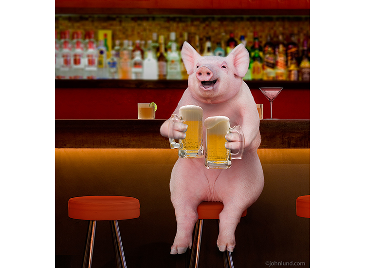 Pig In A Bar Drinking Beer