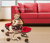 Stock Photography Funny Pictures Animal Pictures