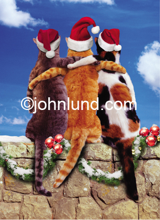 Holiday Friends Funny Picture Of Three Cats Sitting On A