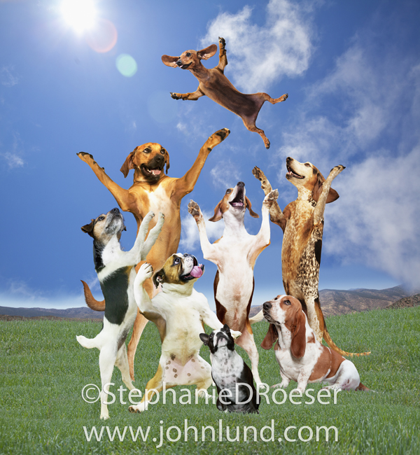 Funny Daschund Photo Of Dogs Tossing The Daschund In The Air