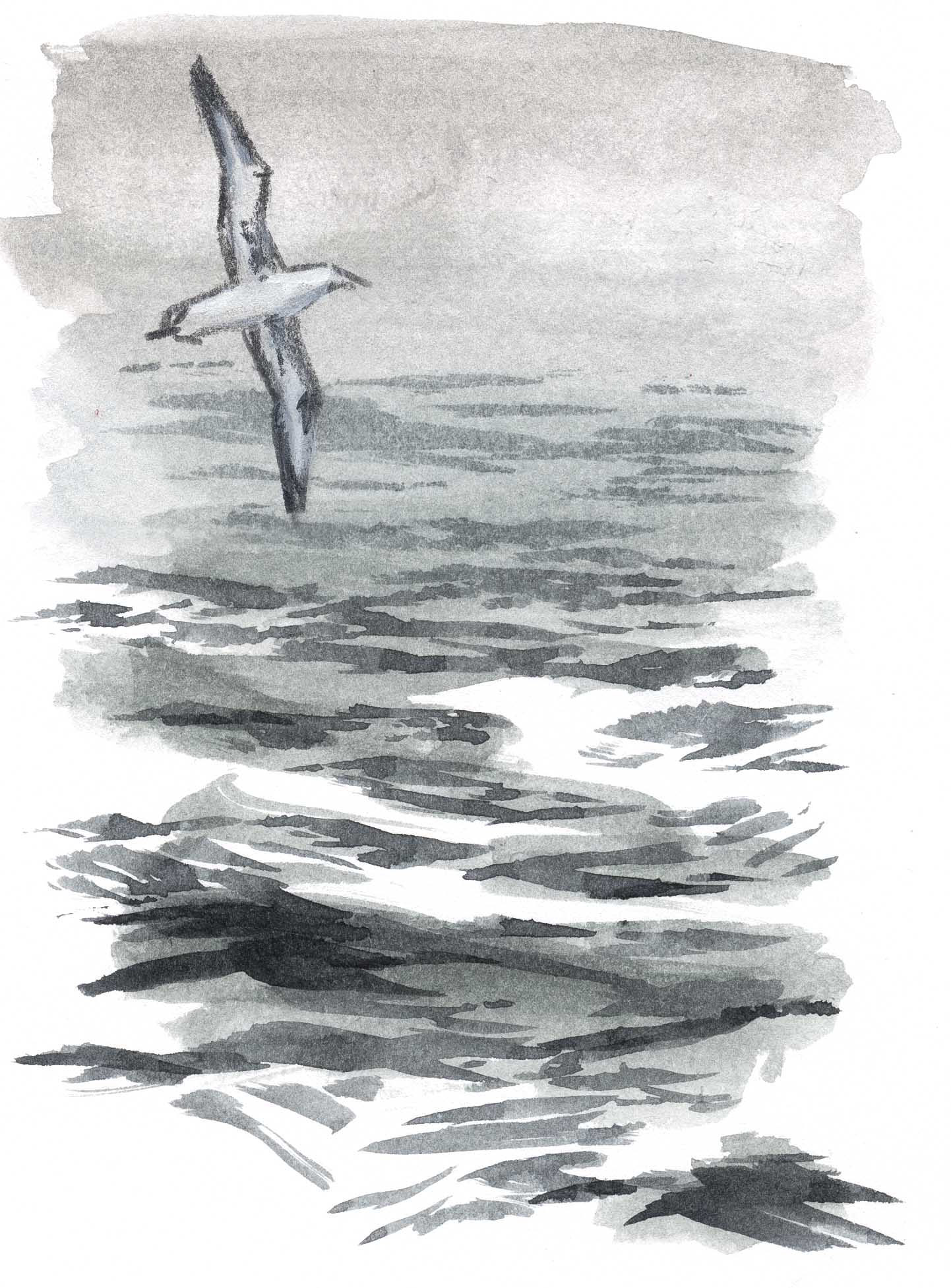 How to draw water open ocean john muir laws using the flat brush cut in darker waves on top of the larger swells lighten the waves in the background by using more diluted paint or by lifting out ccuart Gallery