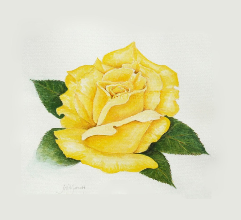 Yellow Rose art