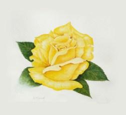 Yellow Rose art