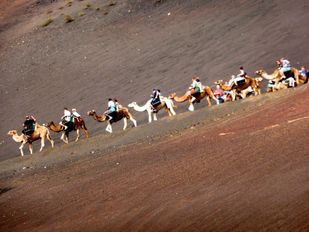 Camel rides are popular at Timanfaya National Park
