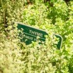 Thyme (Credit: Justin Weiler)