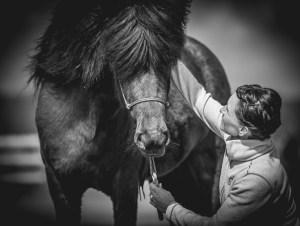 Fotogafering av hästar i Halmstad