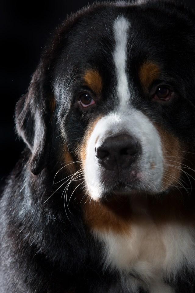 fotograf husdjur halmstad