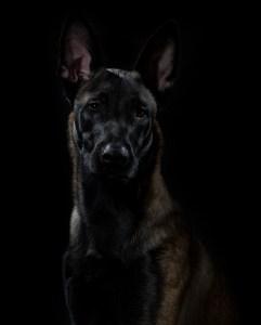 hundporträtt fotograf halmstad