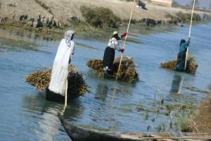 Iraq south Marshlands 7