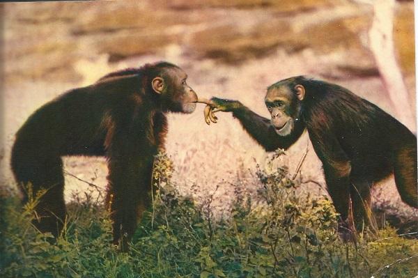 monkey photo IRIS Paris-1